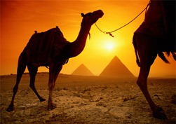 egypt_camel-sunset