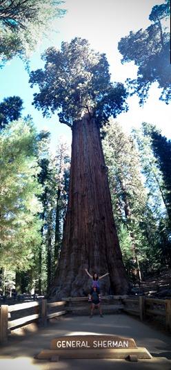 Yosemite-7031